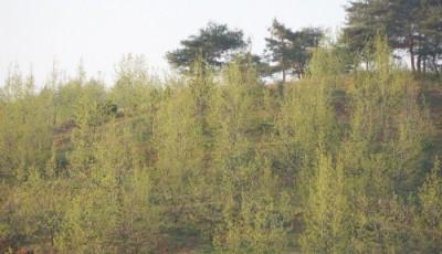 2009년 5월 농장전경